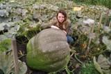Gigantyczna dynia pani Oli ze Świdwina. Na Halloween jak znalazł [zdjęcia]