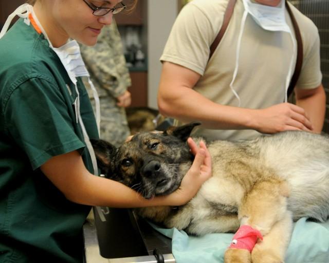 Przechodząc do galerii poznacie najchętniej odwiedzane lecznice zwierząt w powiecie olkuskim