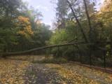 Park-arboretum w Gołuchowie. Uwaga! Wiatr połamał wiele drzew ZDJĘCIA