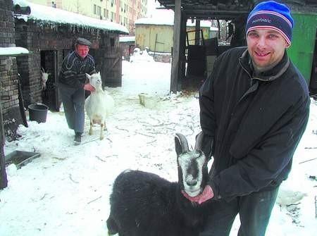 Erwin i Robert Cofałka mają spory zwierzyniec. Kozy Trudka i Baśka to ulubienice gospodarzy. zdjęcia: MAGDALENA CHAŁUPKA