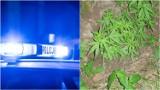 Gmina Pleśna. Zaginionego 37-latka w lasach pod Tarnowem szukali policjanci i strażacy, a on doglądał konopie na ukrytym poletku