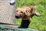 Psy czekają na adopcję w legnickim schronisku [ZDJĘCIA]