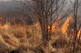 Luszowice: podpalacz traw złapany przez czujnego policjanta po służbie [VIDEO]