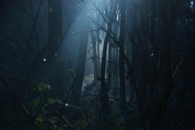 Mężczyzna zgubił się w lesie. Po dwugodzinnej akcji został odnaleziony.