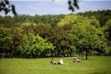"""Najbardziej """"zielone miasto"""" w Polsce? Katowice. Nie chodzi o parki, lasy i zieleńce, a więc o co?"""