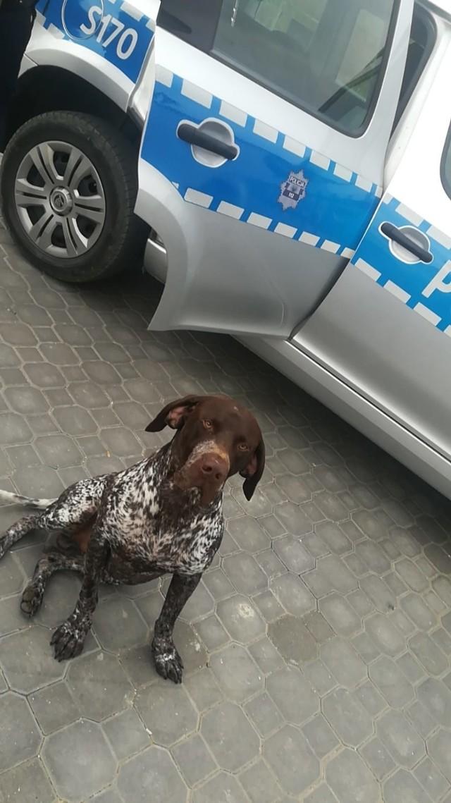 Policjanci odnaleźli Bryka w rejonie stawu na osiedlu Andersa w Busku.