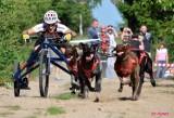 Wyścigi psich zaprzęgów w Pruszczu Gdańskim