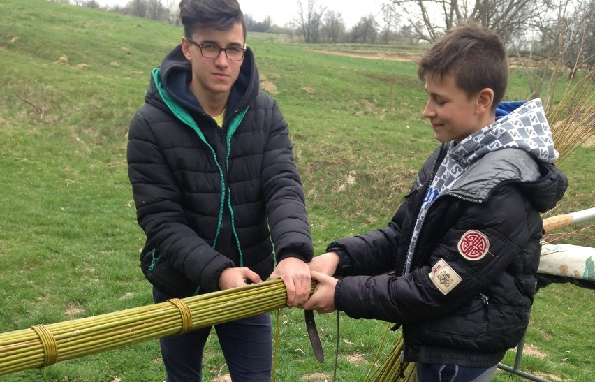 Mateusz i Piotr Leszczyńscy przygotowują palmę