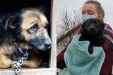 Lubelskie: Sprawiedliwość dla Kulka i psa z Ryk. Coraz wyższe wyroki dla oprawców zwierząt