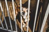 Światowy Dzień Zwierząt. Pomagamy zwierzętom i schroniskom w Śląskiem. Trwa akcja charytatywna #BudujemyBudy