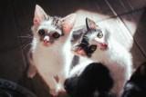 Kocia swatka poleca do adopcji! Bydgoski Klub Przyjaciół Zwierząt Animals szuka domu dla kociąt