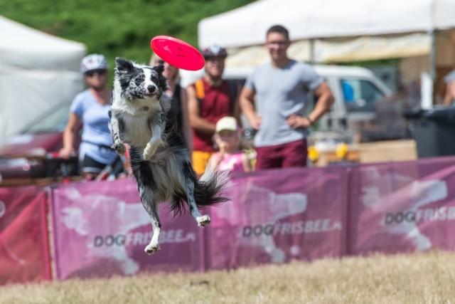 Miłośnicy psów biorą udział w akrobatycznych zawodach. Na uczestników czekają też: darmowe konsultacje, porady, a dla psiaków smakołyki i woda dla ochłody.  Zobacz kolejne zdjęcia --->