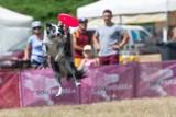 Kejtrówka 2021: Na Cytadeli znów latają psy - czyli pokazy akrobacji czworonogów