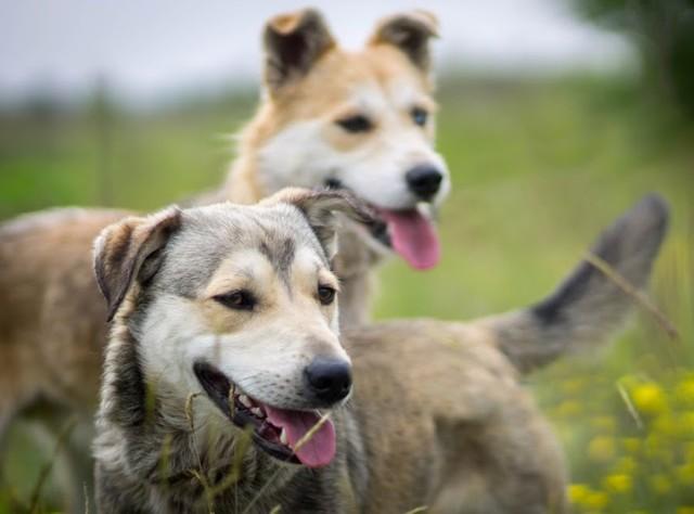 Psy do adopcji: Kto adoptuje Bolka i Lolka?