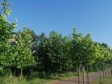 Pruszcz Gdański. Kilkaset drzew, ławki i kosze pojawią się w mieście. Realizowane są kolejne projekty Budżetu Obywatelskiego