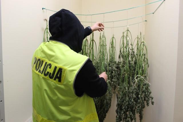 """Zduńskowolscy policjanci zlikwidowali plantację marihuany i """"dziuplę"""" lewego alkoholu"""
