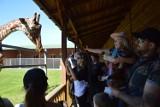 Dzień Dziecka w Zoo Safari w Borysewie w dobie koronawirusa (DUŻO ZDJĘĆ I FILM)