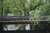 Spacer Szlakiem Żurawim w Wolsztynie (foto)
