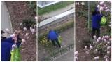 Świdnica. Bukiet z żonkili i magnolii zerwanych w parkach kosztował ją 500 złotych