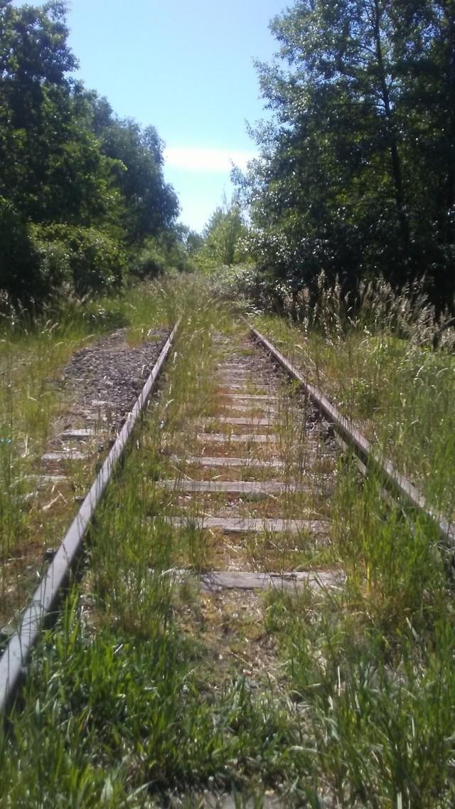 Dawna trasa kolejowa, przebiegająca w okolicach Gubina jest obecnie rozkradziona. Odbudowana najpewniej nie zostanie, ale może zostanie na niej wykonana ścieżka rowerowa?