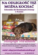 Towarzystwa Opieki nad Zwierzętami zachęca do sprzątania po psach