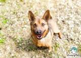 Nowych właścicieli znalazły kolejne bezdomne psy z terenu gminy Błaszki. Gmina zachęca do następnych adopcji ZDJĘCIA