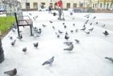 Rynek w Bochni: zakaz karmienia gołębi, jazdy na rolkach i mycia zwierząt w fontannie