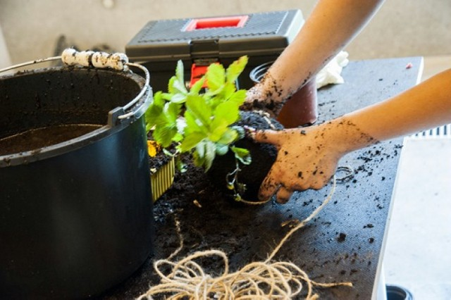 Uprawa roślin, warsztaty dotyczące zdrowego trybu życia. W ...