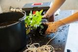 Uprawa roślin w centrum Warszawy? W Norblinie powstaje zielona przestrzeń