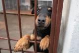 Kraków. Niewiele osób płaci podatek od psów, a to pieniądze na ochronę zwierząt