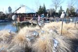 Ogrody Kapias w Goczałkowicach Zdroju zmrożone zimowym słońcem wyglądają zjawiskowo - zobacz ZDJĘCIA