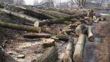 Wytną tysiące drzew przy drogach wojewódzkich na Dolnym Śląsku, także w okolicach Góry i innych miejscowości powiatu górowskiego [ZDJĘCIA]