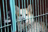 Zobaczcie zdjęcia piesków i kotków, one czekają na adopcję w legnickim schronisku