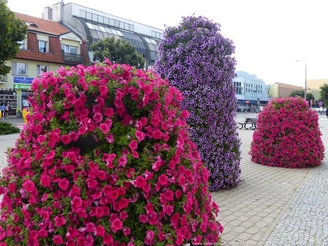 Zdjęcia kwiecistego Bielska Podlaskiego przygotowane na potrzeby ósmej edycji plebiscytu Terra Flower Power - Najpiękniej Ukwiecone Miasto w Polsce.  Więcej szczegółów tutaj