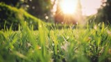 Budzi nadzieję, przynosi radość – wiosna!