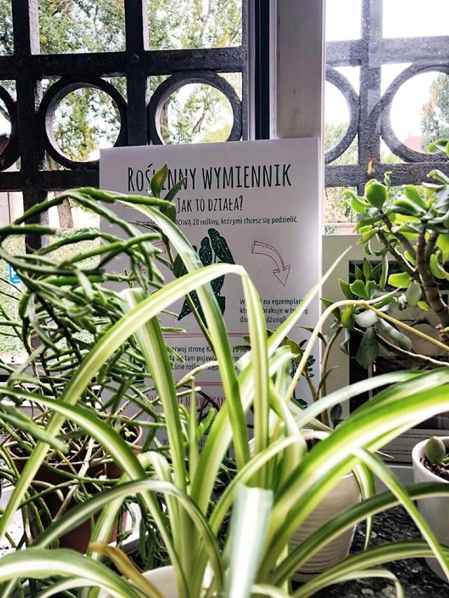 Punkt wymiany roślin w centrum Warszawy. Zostaw i weź zieloną ozdobę ze sobą [ZDJĘCIA]