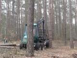 Wycinka lasu za opłotkami ośrodka nad jeziorem Głębokie. Sprawa budzi spore kontrowersje