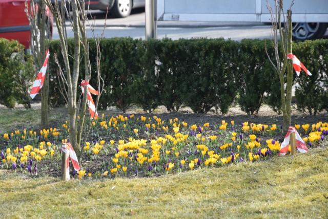 Wiosna zawitała do Wielunia. W parku robi się kolorowo