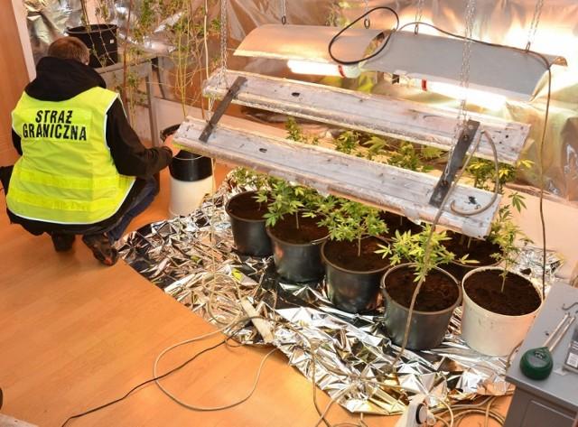 Straż graniczna podczas zabezpieczania sadzonek