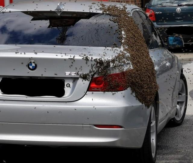 Pszczoły, które obsiadły samochód, mogą być bardzo niebezpieczne. O ich ściągnięcie lepiej poprosić specjalistów.