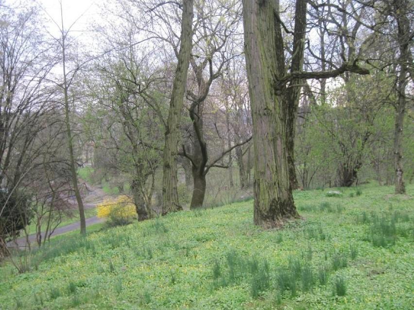 Ogród Botaniczny Umcs W Najbliższą Niedzielę Rozpoczyna