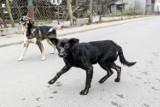 Gmina Brzyska ma sposób na bezdomne zwierzęta