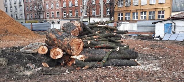 Drzewa wycięto o poranku. Deweloper tłumaczył, że prace budowlane uszkodziły ich system korzeniowy.   Zobacz kolejne zdjęcia. Przesuwaj zdjęcia w prawo - naciśnij strzałkę lub przycisk NASTĘPNE >>>