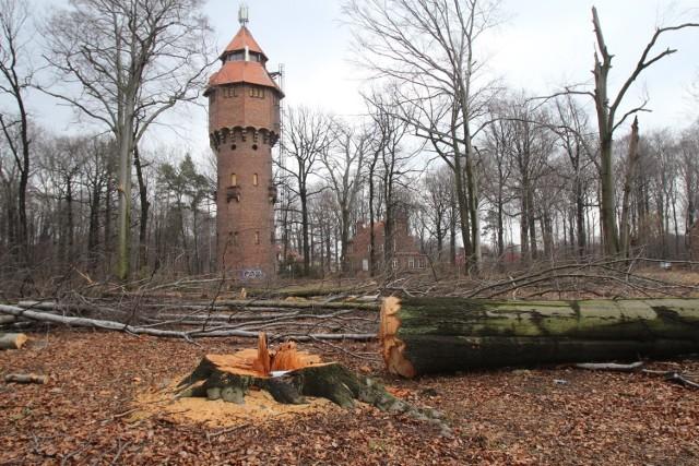 Wycinka drzew w Giszowcu