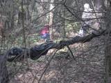 Idziecie na spacer, a tu taki jegomość! Oto, co się czai w lasach na Dolnym Śląsku... ZDJĘCIA