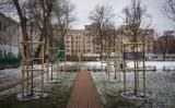 Więcej zieleni wokół szkół i przedszkoli. Miasto posadziło drzewa i żywopłoty przy ponad 20 placówkach