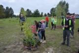 W Zduńskiej Woli znów sadzono las. To kolejna akcja stowarzyszenia Zielona Wola ZDJĘCIA