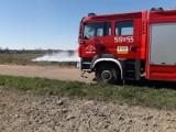 Bierutów: OSP interweniowała do pożaru trawy [FOTO]