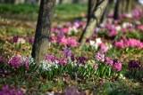 Wiosna na dobre rozgościła się w Gdyni! Dzielnice miasta rozkwitły
