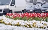 Opady śniegu na Pomorzu [28-29.03.2018]. Ostrzeżenie IMGW: Opady śniegu w nocy z 28/29 marca oraz w dzień 29.03.2018.